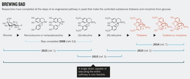 Nowa metoda produkcji  zamienia cukier w heroinę?