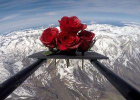 Kosmiczne różne na Dzień Matki: kwiaty, które odbyły pozaziemską podróż