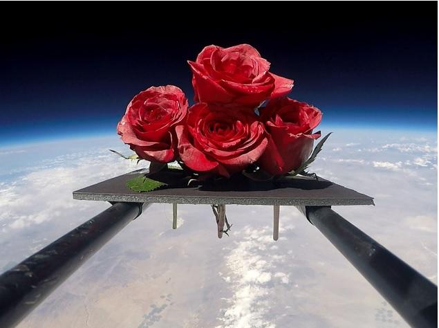 Kosmiczne rozne na Dzien Matki kwiaty, ktore odbyly pozaziemska podroz4