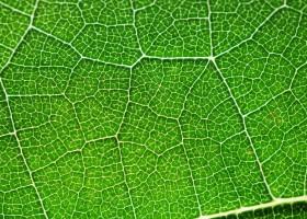 Naukowcy odkryli odwróconą fotosyntezę
