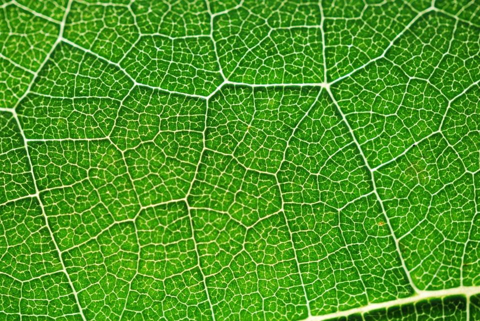 odwrocona fotosynteza