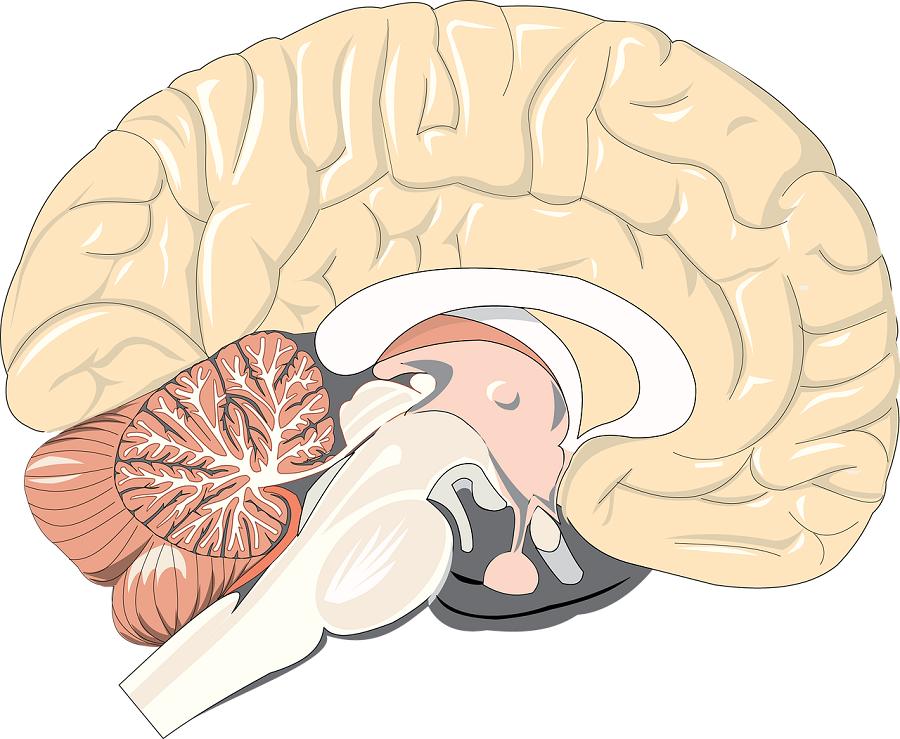 Terapia komorkami macierzystymi cofneła efekty udaru mozgu