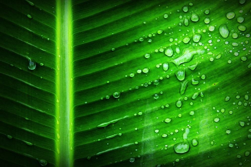 Sztuczna fotosynteza 10-krotnie wydajniejsza od naturalnej