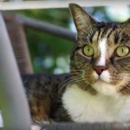 Kot bijący rekord Guinessa