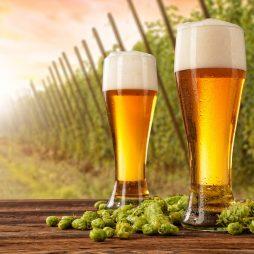 Przekonaj się czy piwo rzeczywiście może być zdrowe dla naszego organizmu. Prześwietlamy 4 mity na temat piwa
